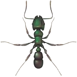 Green Headed Ant