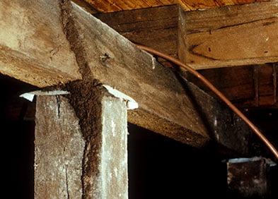 Termite Detouring in a Home
