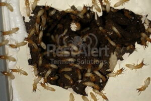 Termites in the Walls