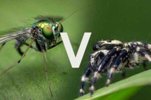 Mosquito vs Spider