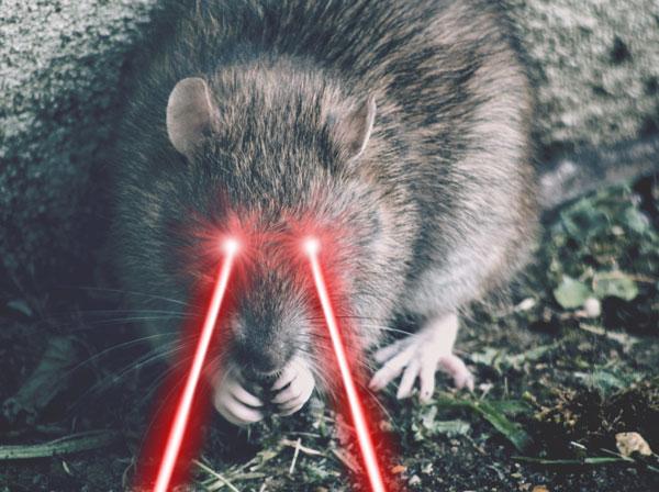 Laser Rat
